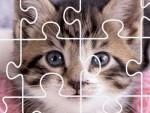 Kedi Yapboz Oyna